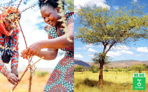 csr-just-diggit-planting-trees-new-logo