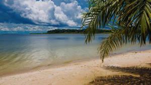 Ssese islands Strand Meer Palmboom