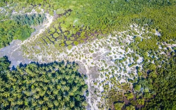 Mangrovebos ecologische footprint